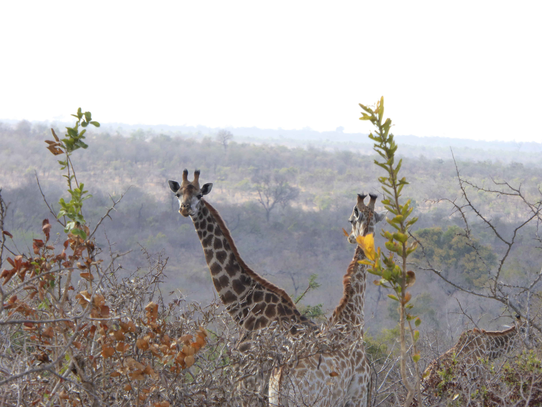 Liebe auf den ersten blick erlebnis südafrika sunniest way